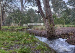 Botanical Gardens - Barkers Creek