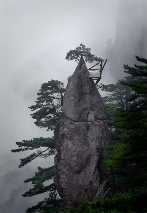 Precious Tree, Huang Shan, China 2006