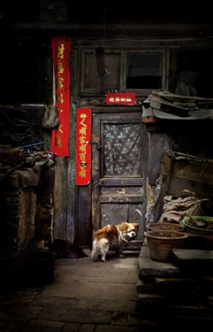 Dog at the Door, Datong, China 2006
